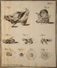 Domenico-Cotugno-orecchio-interno-tavola-1-252x300.png