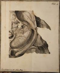 Domenico-Cotugno-orecchio-interno-tavola-2-247x300.png
